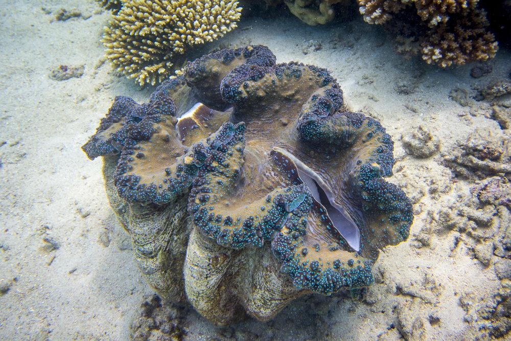 clams-joli-TAC73111 copy.jpg