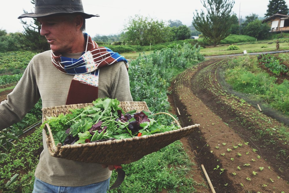 Farm-to-fork experience at O'o Farms || Maui's upcountry || January 2016