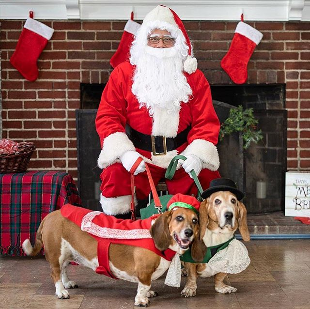 @northstarpetrescue photos with Santa! I had so much fun yesterday photographing all of the dogs for such a great cause. Thank you to NorthStar for asking me to be apart of this wonderful event! 🎅🎄 (The last two photos are dogs who are looking for a new home. If anyone is interested let me know)
