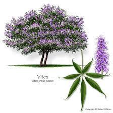 MaNaturopathe.com-vitex