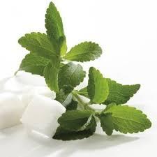 MaNaturopathe.stevia