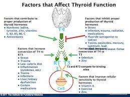 MaNaturopathe.com.thyroïde