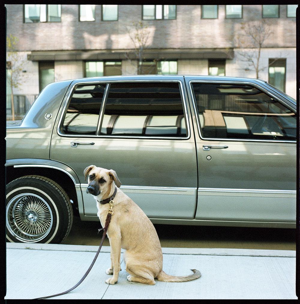 27-Chandler-Puppy-with-Vintage-Cadillac_-Kodak-Portra-800.jpg