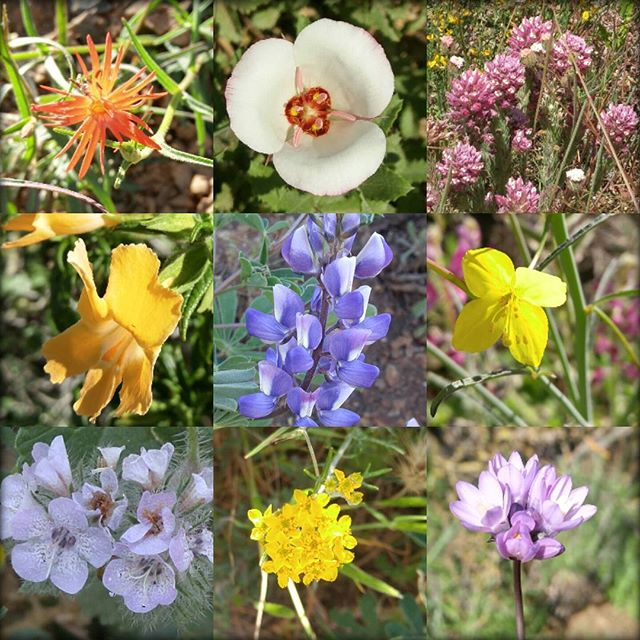 ray miller wildflowers 2017.jpg