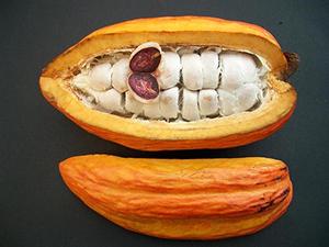 BP_cocoa_beans_3.jpg