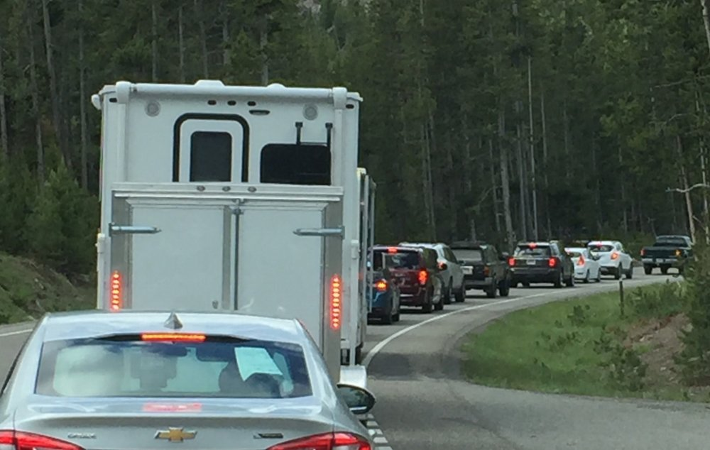 Bumper to Bumper at Yellowstone National Park