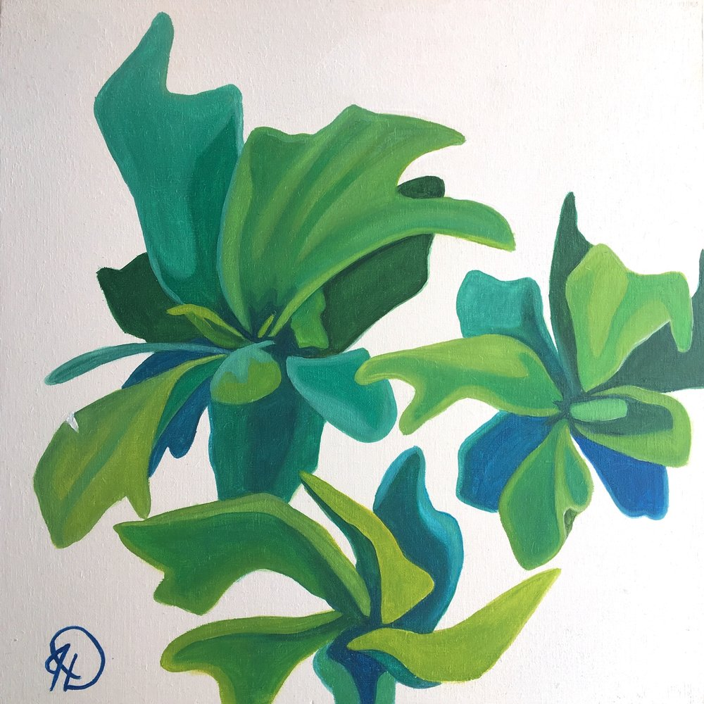 """Succulent Study II - 8"""" x 8"""" oil on panelSOLDearly study"""