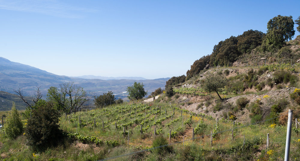 20180606_Andalucía-22.jpg