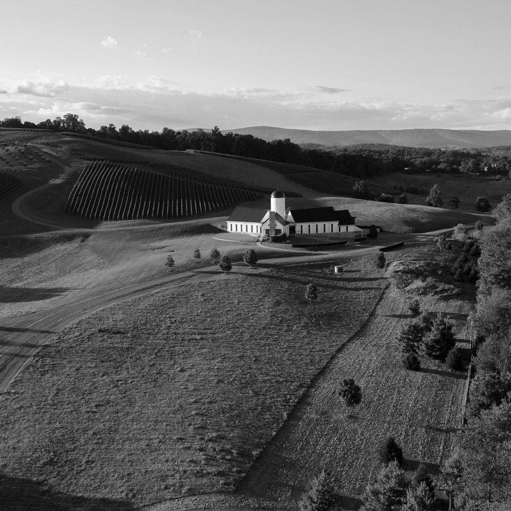 black-and-white-vineyard.jpg
