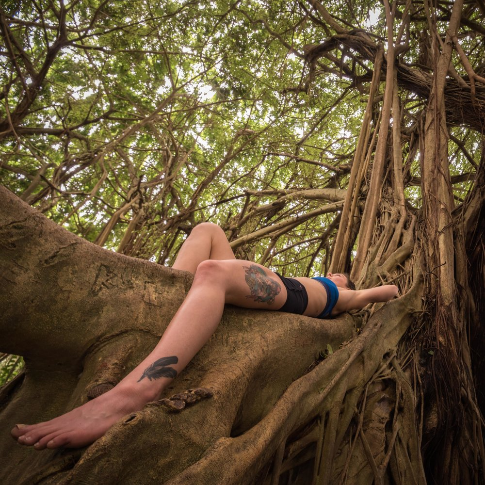 Relaxing in a banyan tree. Photo by Peter Constantinople.