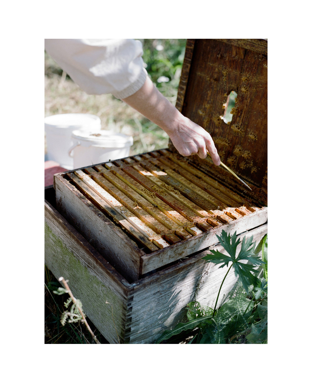Honey harvest, Cotswolds, UK.