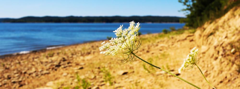 lake monroe.png