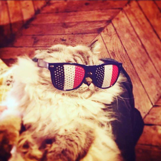 [#CM2018⚽️] Prêt pour le match.  ALLEZ LES BLEUS ! 🇫🇷 🇫🇷 🇫🇷 #fiersdetrebleus #coupedumonde2018 #finale #france #paris #fifaworldcup2018 #football #soccer #catstagram #instacats #catsoninstagram #catsofinstagram #catstyle #cats