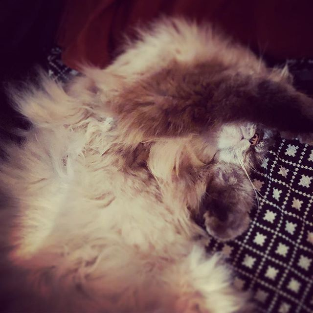 Saturday night mood 💤💤💤 #saturdaynight #saturdaynightvibes #sieste #siesta #rest #helmutvonoberkampf #cats #catsofinstagram #catsofinstagram #instacats #catsoninstagram #catstagram #catstyle #paris