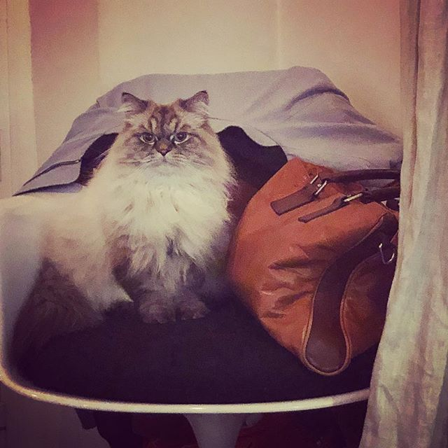 Helmut Executive.  #business #CEO #IamTheBoss #Patron #boss #helmutvonoberkampf #frenchbrand #madeinfrance #france #paris #instacats #cats #catstagram #catsoninstagram #catsofinstagram #fashion #instafashion #streetwear
