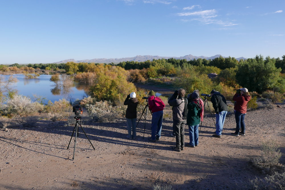 Above: El Rio Preserve is a valuable site for bird-watching enthusiasts from all around the world.