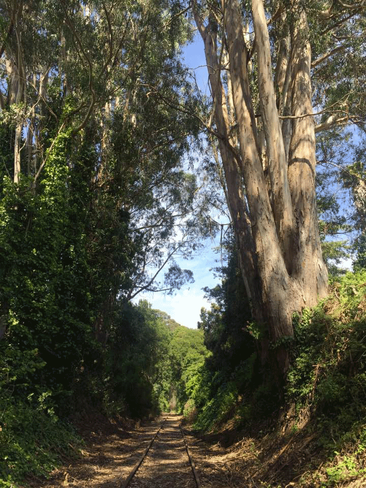 When we build Greenway, users will enjoy the welcome shade provided by this canopy near New Brighton State Park. Keeping the tracks in place here would likely mean cutting down many large trees, excavating the hillside and building a retaining wall to make room for a trail.