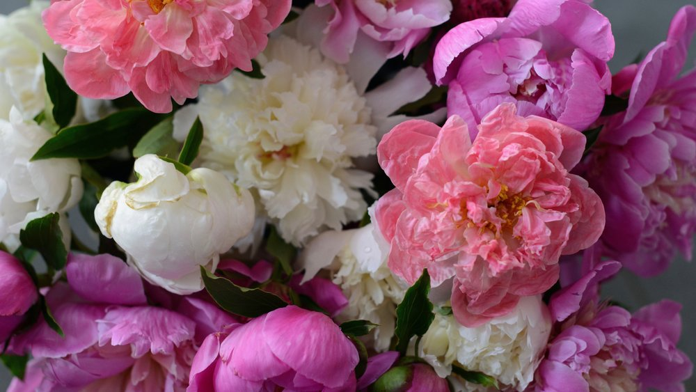 living with petals - READ BLOG