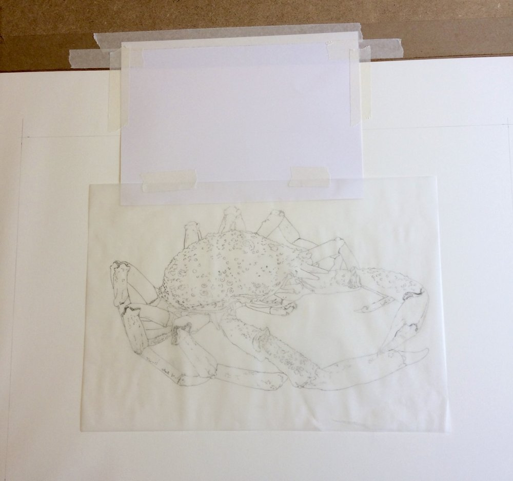 Positioning the tracing on watercolour paper