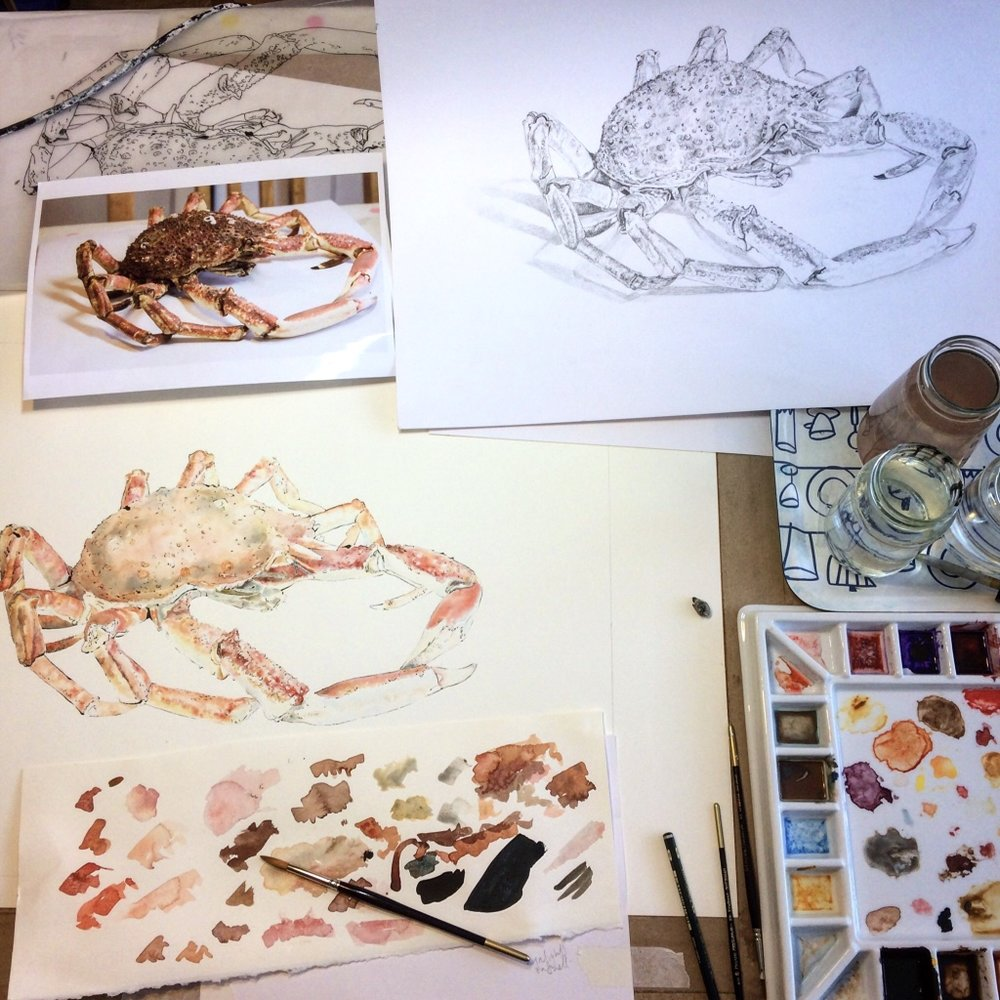 Painting Blotted Line print of Spider Crab
