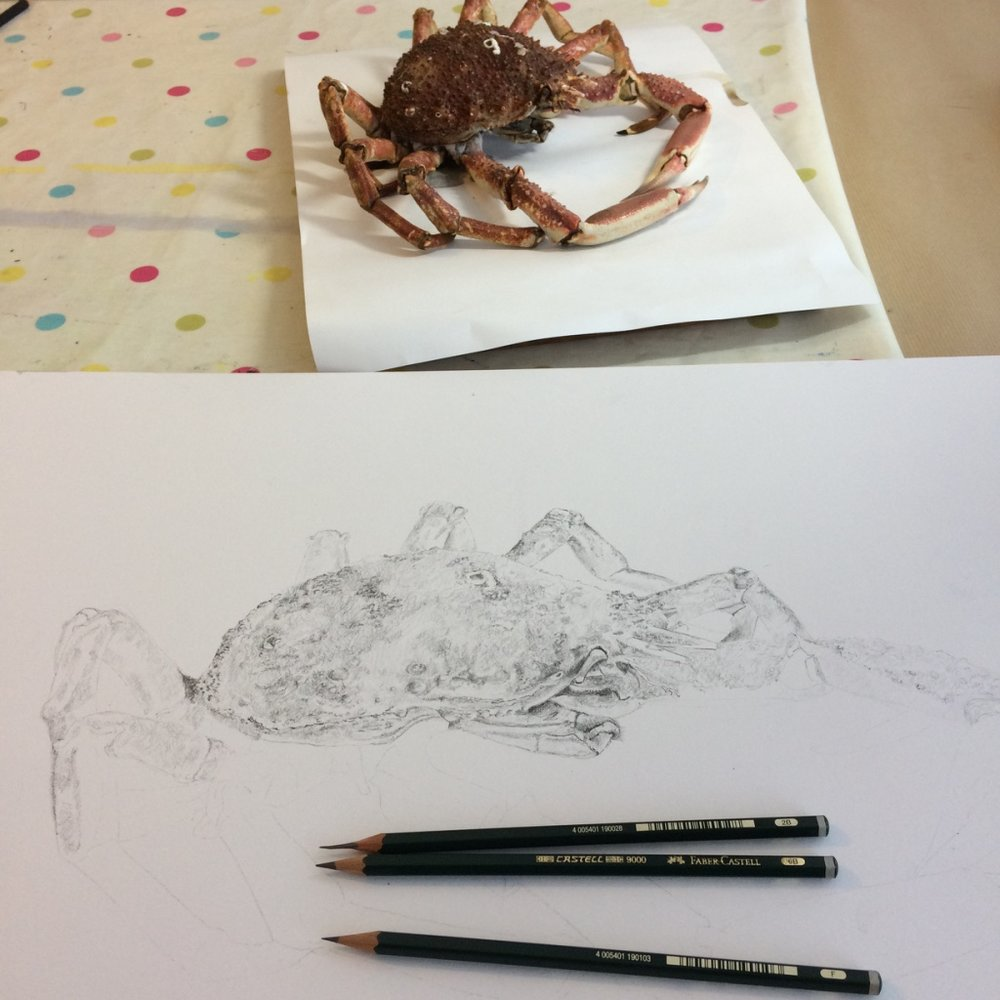 Adding tone to drawing of Spider Crab