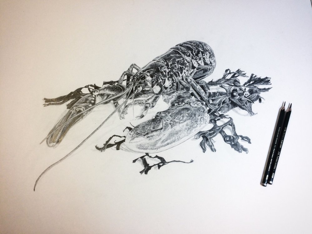 Native Lobster Pencil Drawing