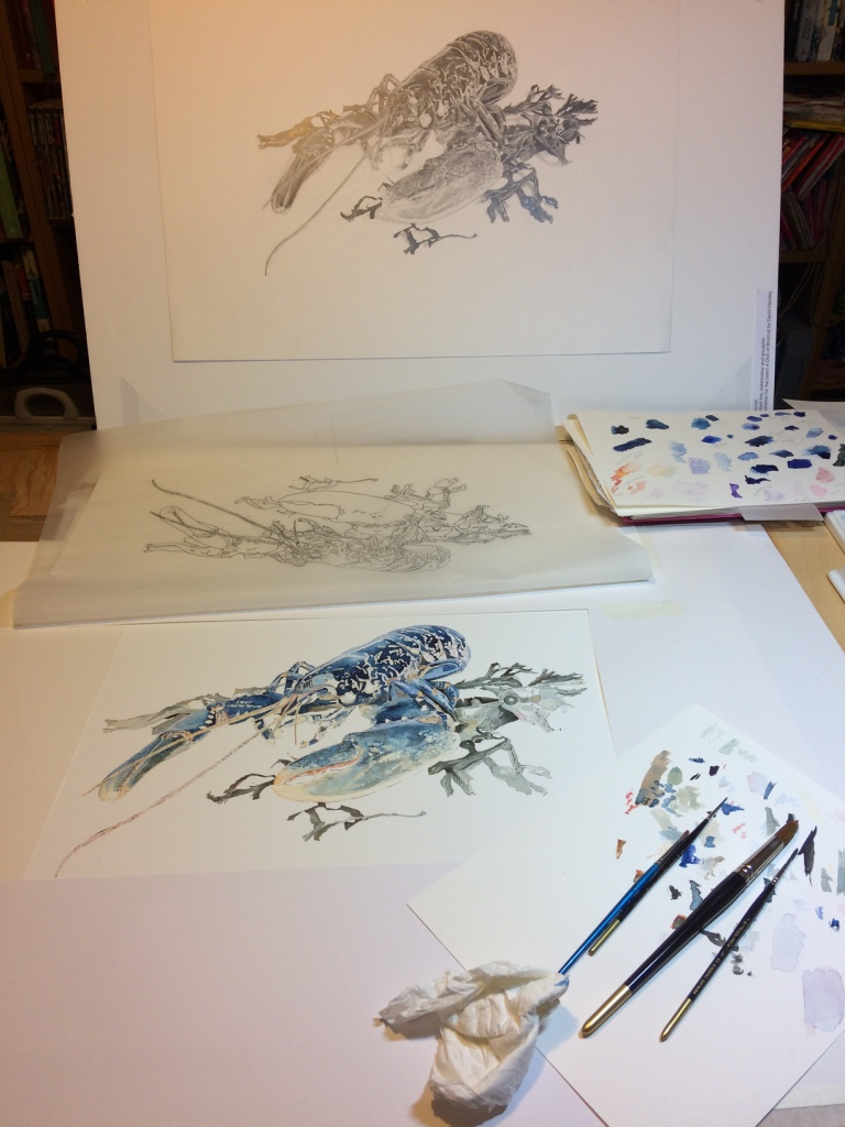 Watercolour painting of a Native Lobster in Progress