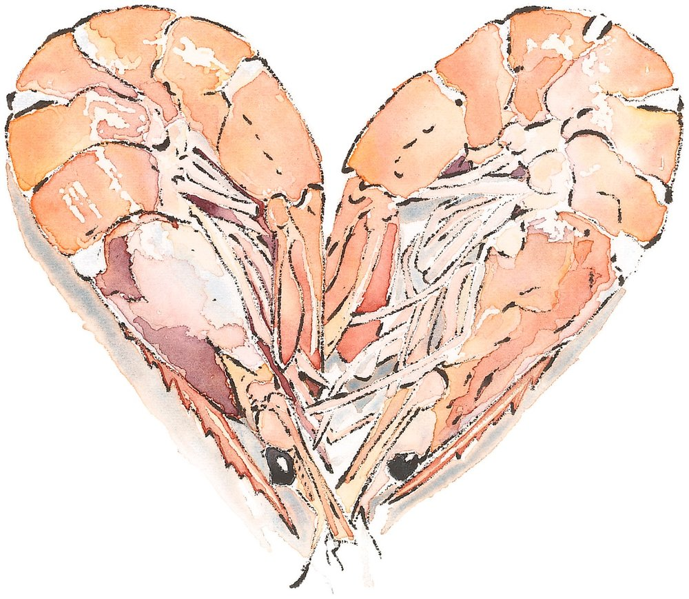 Prawn Heart - Watercolour & Blotted Line