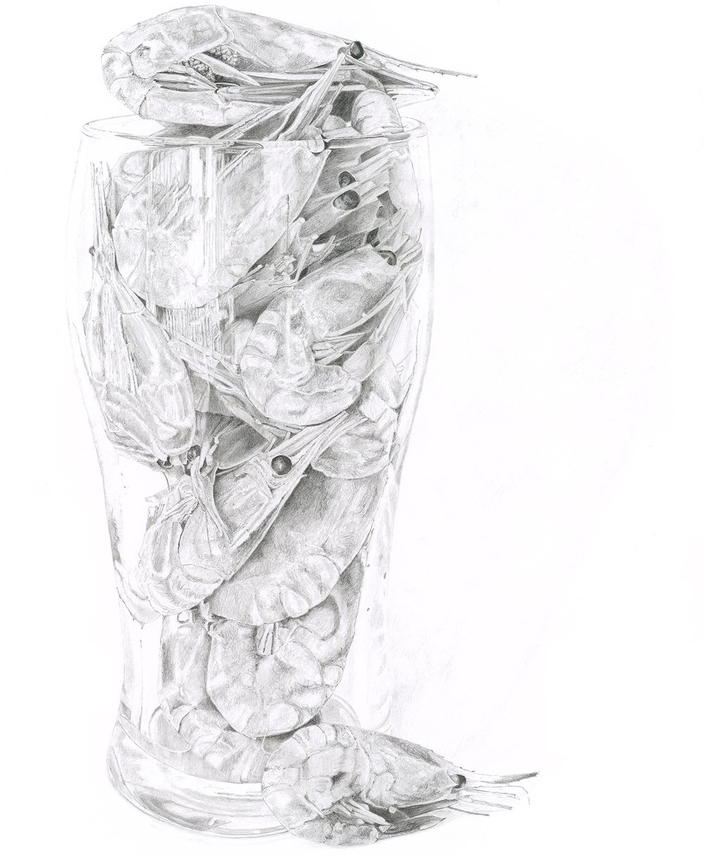 Pint of Prawns - Pencil Drawing by Lucy Clayton