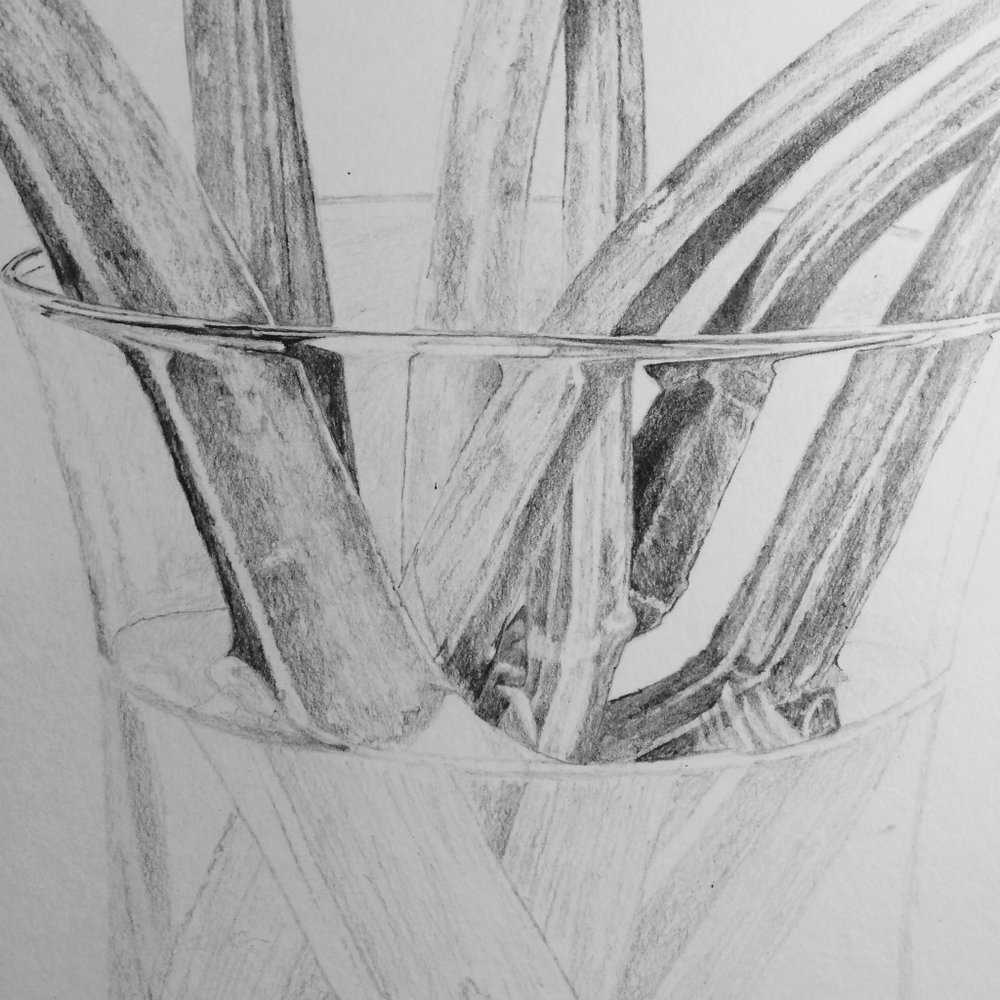 Detail of Rhubarb drawing stalks in vase of water.