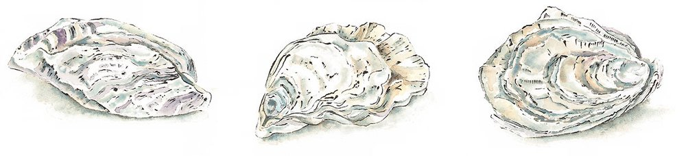 Oysters - Blotted Line & Watercolour