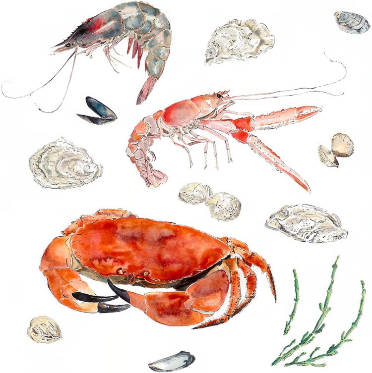 Seafood - Giclee print of an original Blotted Line & Watercolour Painting by Lucy Clayton