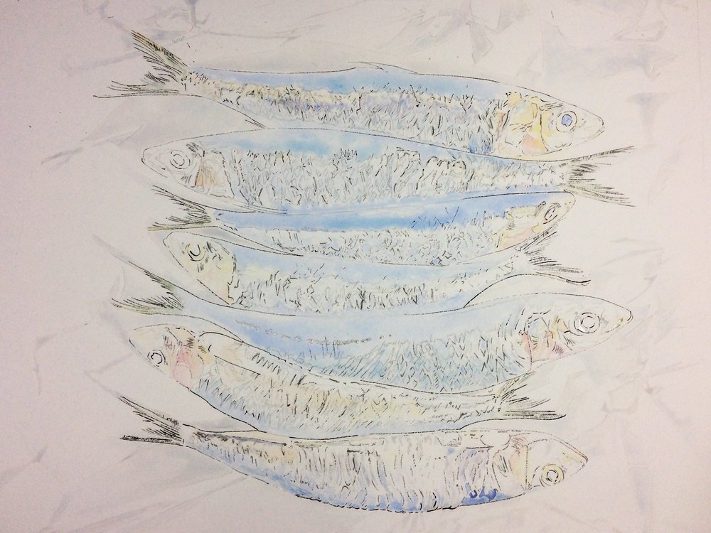 Watercolour painting of Sardines - Failed attempt, the blotted line marks and paint weren't working together to describe the shimmer of the sardines.