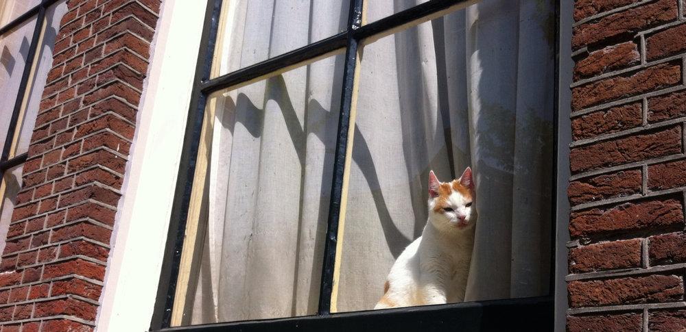 raamkat-nieuwezijds-voorburgwal.jpg