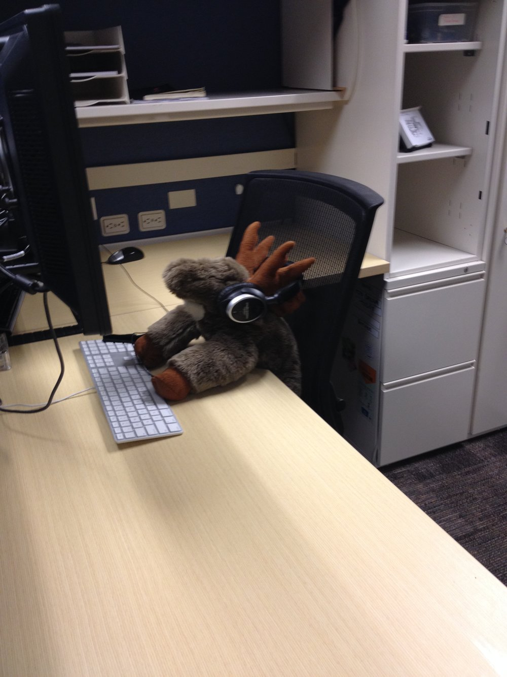 peace-corps-moose-cubicle.jpg