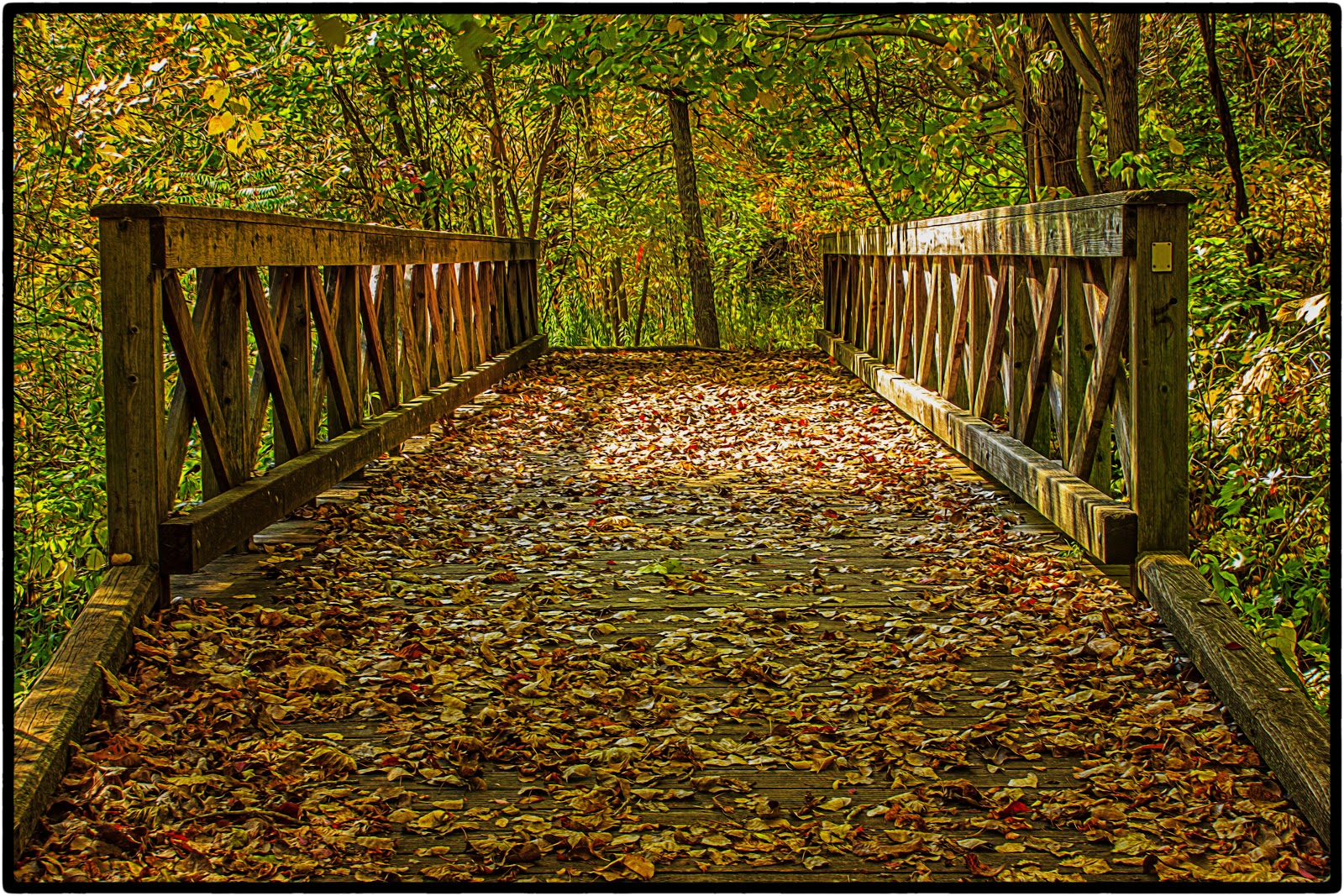 Forest Trail, Bridge 5