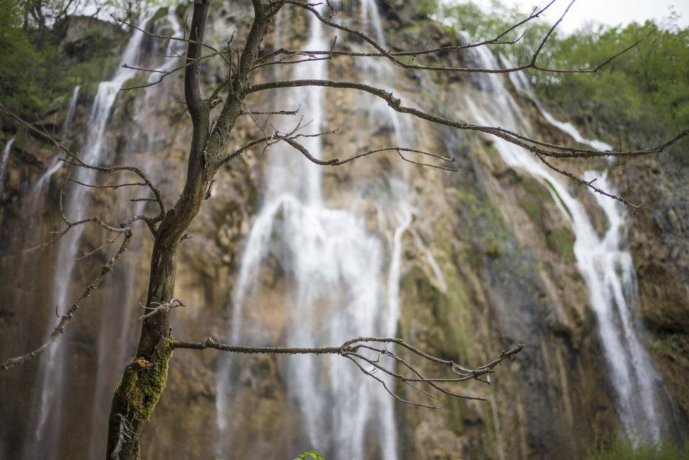 Tree and Falls