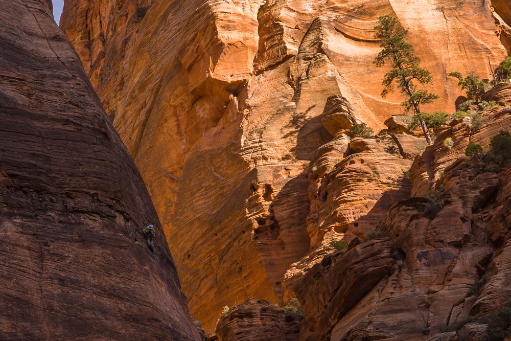 Climber on Zion Wall