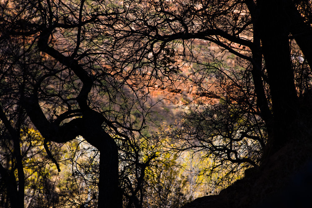 Abstract of Trees with Zion Colors