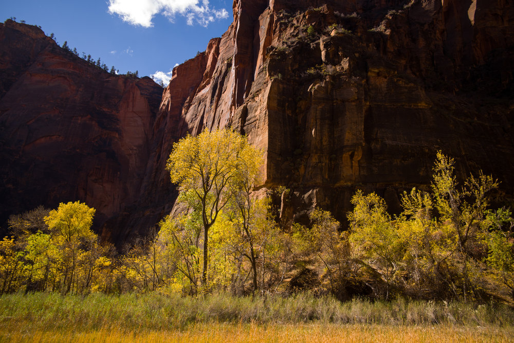 The autumn colors at Big Bend in Zion