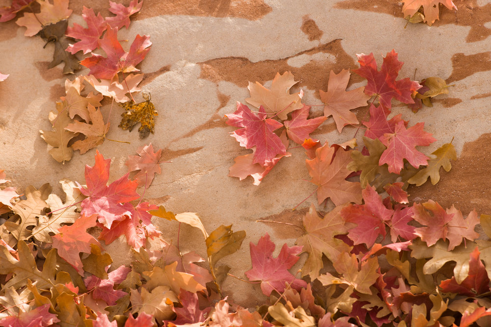 Red leaves on red rocks