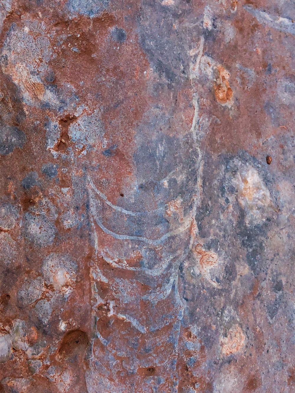 A nautiloid fossil
