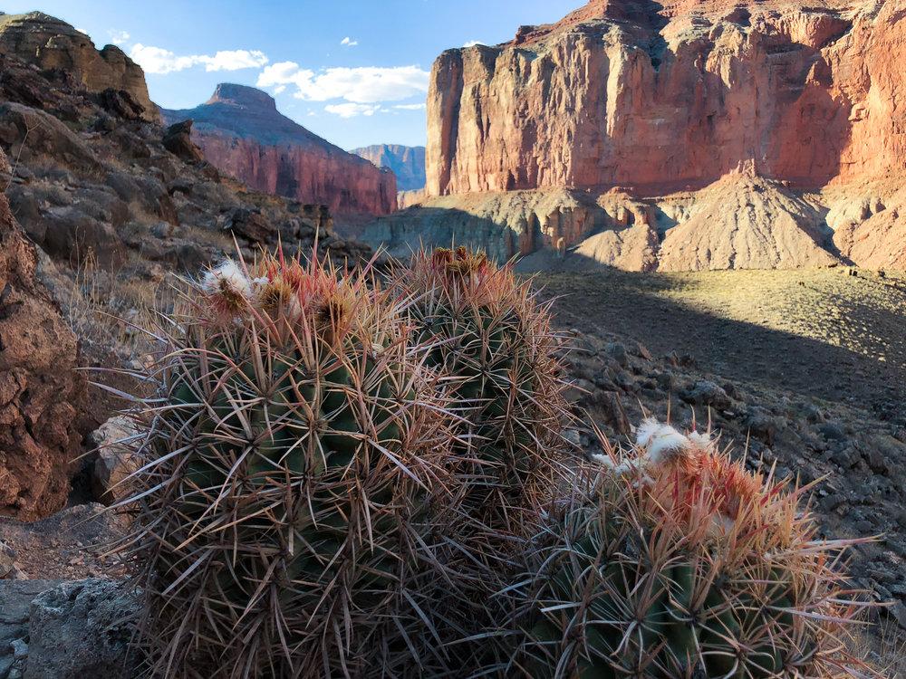 Cactus at Nankoweap