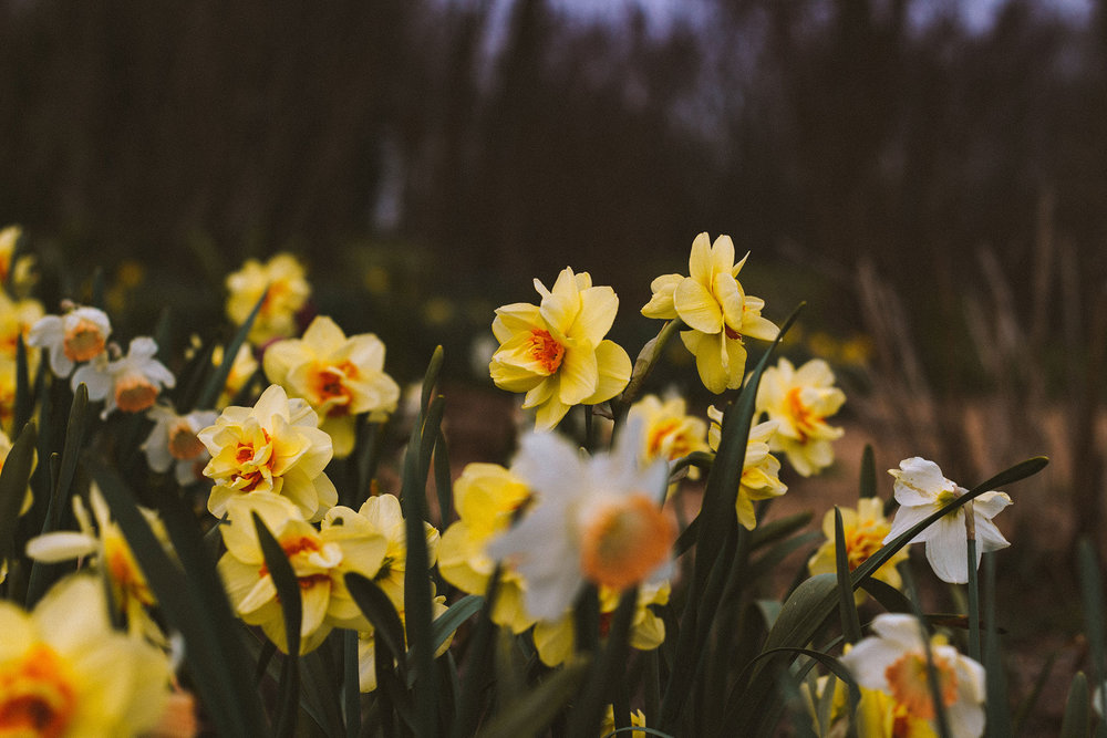 The daffodils are blooming and we want your kiddos to stay safe this spring. Here are some ways to make sure your garden is fun for your whole family. -