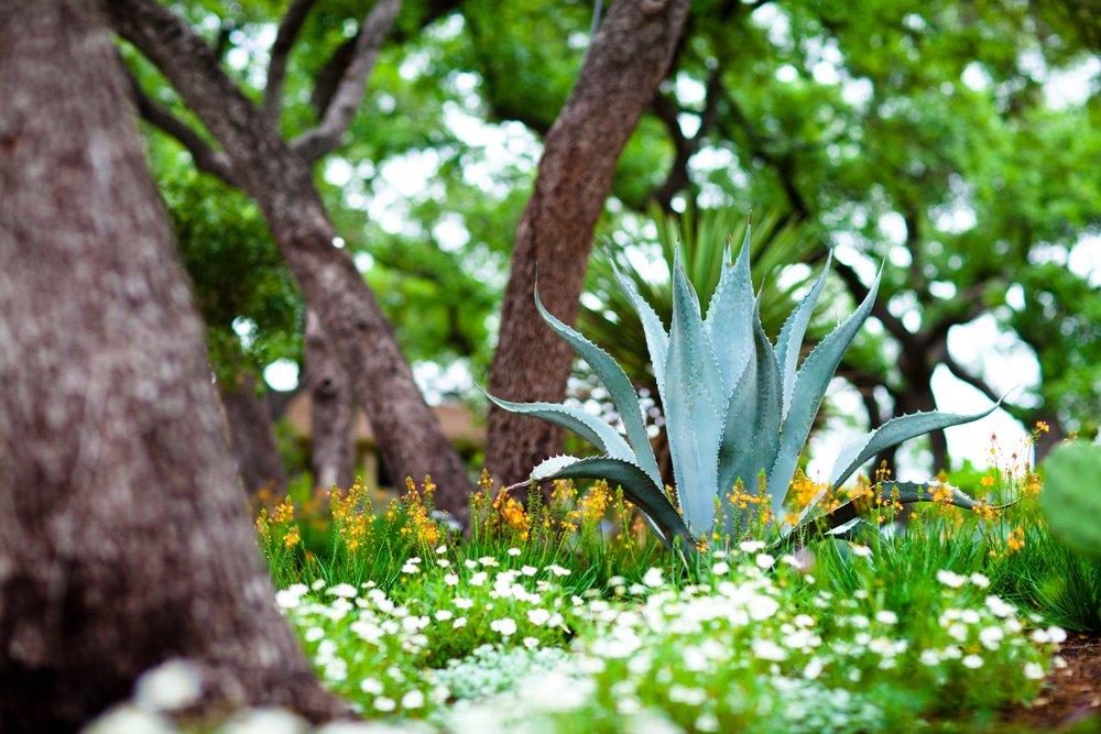 Botanical_001.jpg