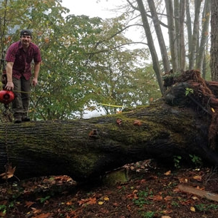 Reclaimed tree Gig Harbor