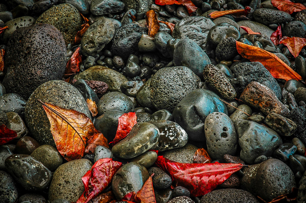 ©Ayash Basu. It's important to look around your main subject even if it is an excellent one. Here I was shooting a beach scene in Hawaii, which was amazing in itself but just looking down the path where I was standing revealed this colorful scene of red leaves against wet volcanic rocks.