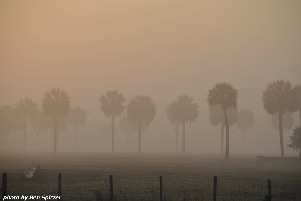 Dixie Palms.jpg