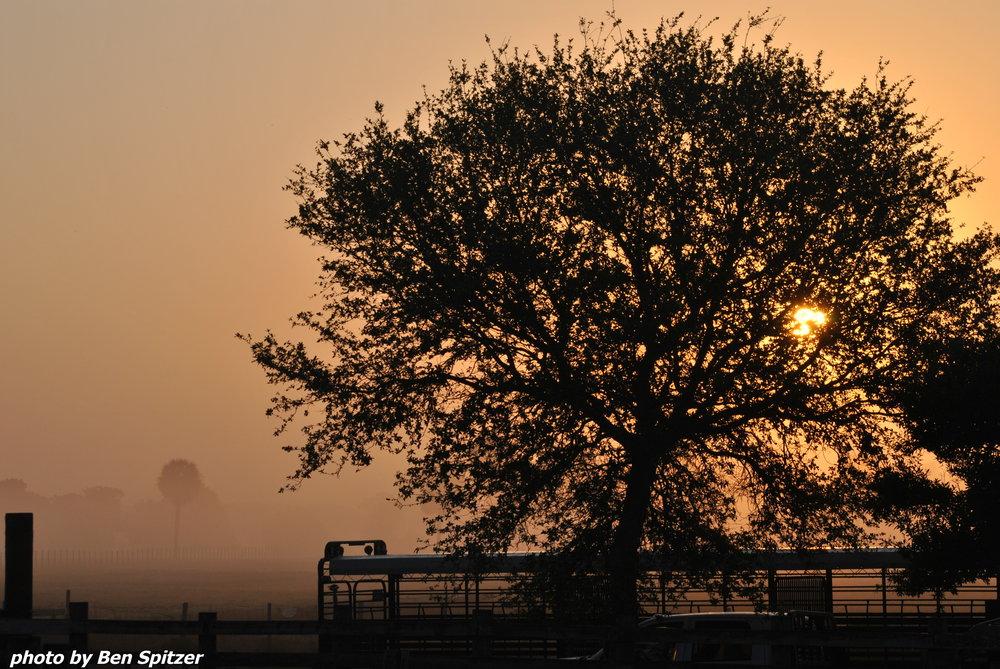Dixie Rising Sun.jpg