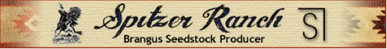 Spitzer Ranch LLC
